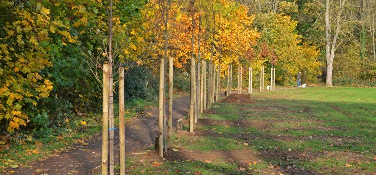 Schützenwald in Norf
